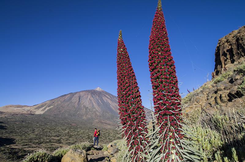 Tenerife lanceert vernieuwd merk en logo