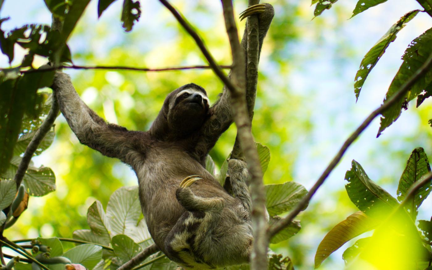 World Environment Day: Drie redenen waarom Peru bij de meest biodiverse landen ter wereld hoort