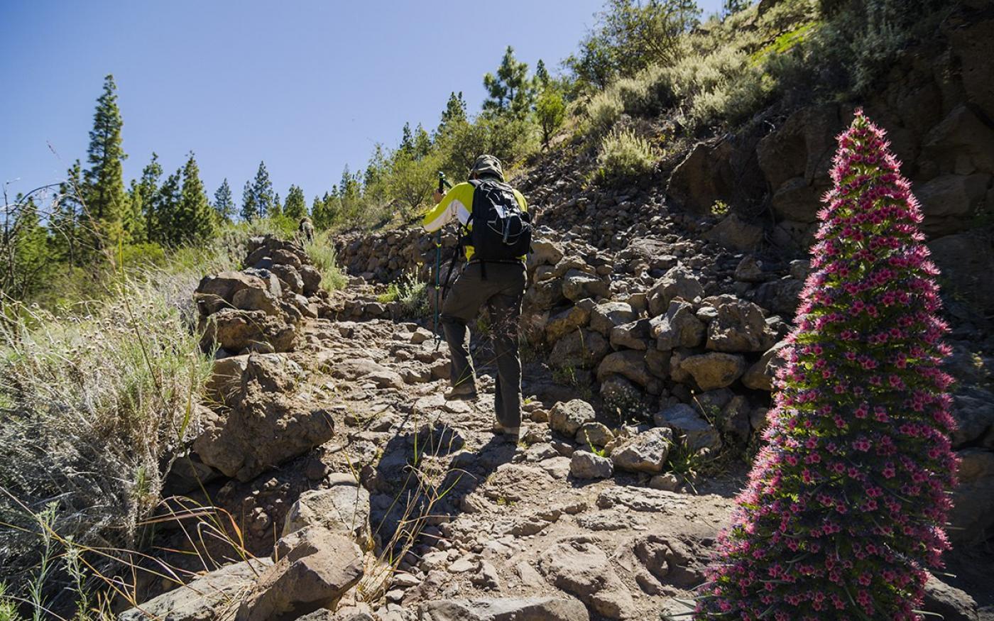 Tenerife Walking Festival dit jaar online